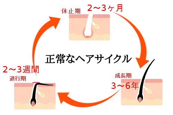 女性用育毛剤の効果は3ヶ月から6ヶ月の期間が必要1